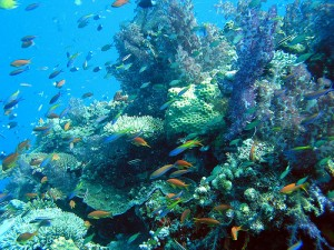scuba diving fiji