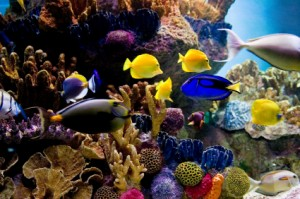 Costa Rican Reef